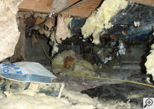 A messy crawl space filled with rotting insulation and debris in Whitestone.