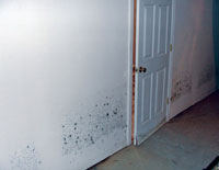 Damaged basement walls